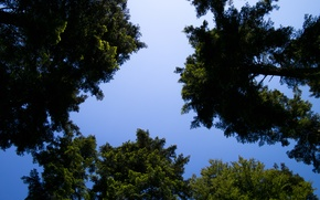 Picture Nature, Sky, Summer, Sunshine, Forest, Trees, Woods, Cloudless, Pines