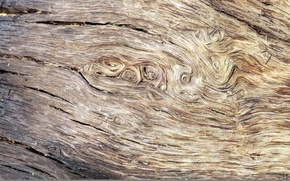 Picture abstract, wood, texture