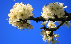 Wallpaper the sky, flowers, tree, spring, garden