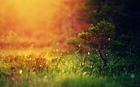 Wallpaper forest, grass, light, nature, tree