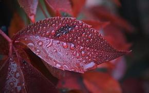 Picture Macro, Sheet, Drops, Autumn, Autumn, Macro, Leaves, Drops