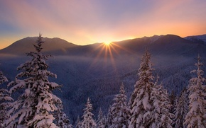 Picture winter, sunset, nature, tree, frost, beautiful, snow., lesogor'e
