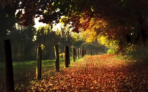 Picture posts, road, columns, nature, road, leaves, path, foliage, paths, alley, alley, autumn