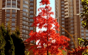 Wallpaper home, trees, autumn, the city