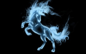 Picture animal, horse, mane, tail, black background, hooves
