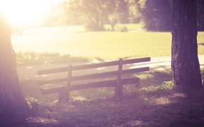 Picture greens, grass, the sun, trees, bench, nature, background, tree, widescreen, Wallpaper, vegetation, mood, shop, wallpaper, …