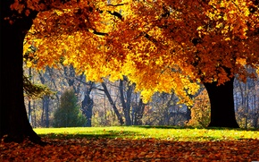 Wallpaper Park, nature, autumn leaves, falling leaves, trees, photos