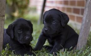 Wallpaper kids, yard, black, puppies