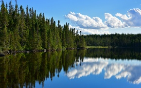 Picture forest, lake, pond, reflection, Canada, Canada, Newfoundland, Newfoundland, Puddle Pond
