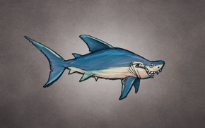 Picture fish, shark, shark, fish, dark background