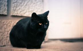Picture cat, eyes, cat, black