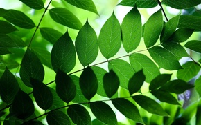 Picture leaves, branches, nature, green, background