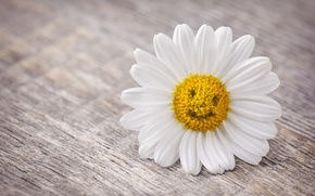 Picture flowers, smile, background, mood, petals, Daisy, flowers, widescreen, full screen, HD wallpapers, widescreen