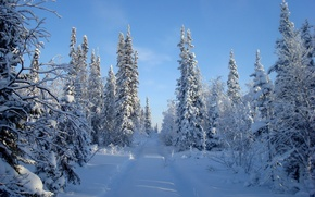 Picture winter, road, forest, the sky, snow, trees
