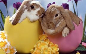 Wallpaper flowers, eggs, Rabbits, Easter