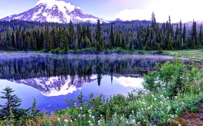 Picture the sky, snow, trees, flowers, mountains, lake, spruce, spring, top, USA, Mount Rainier