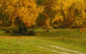 Picture autumn, trees, nature, Park, foliage, Nature, trees, park, autumn, leaves, fall