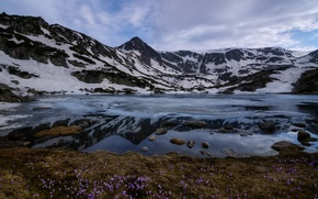 Wallpaper flowers, snow, Rila, mountains, Bulgaria, clouds, Rila national Park, Ribnoto lake