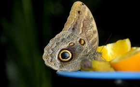 Picture macro, lemon, butterfly