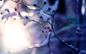 Picture winter, the sun, macro, snow, trees, branches, background, tree, pink, Wallpaper, plant, blur, wallpaper, widescreen, ...