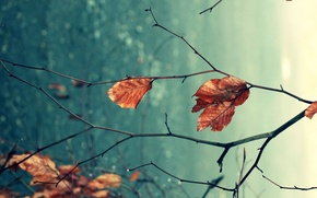 Picture autumn, leaves, macro, branches, nature