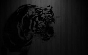 Picture tiger, background, stencil, Different
