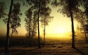 Wallpaper the sun, autumn, field, trees, birch