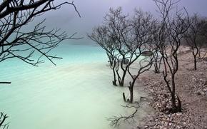 Picture trees, nature, lake, shore