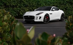 Picture Jaguar, White, F-Type