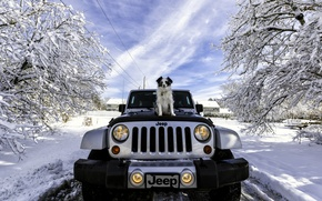Picture winter, machine, snow, dog, Jeep, Jeep Wrangler