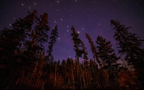 Picture forest, stars, light, trees, landscape, night