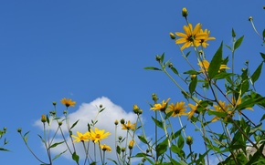Picture summer, blue sky, yellow flowers, white cloud