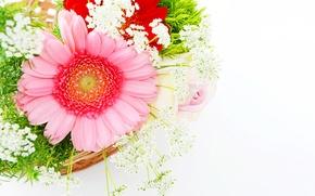 Picture pink, gerbera, flowers