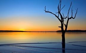 Wallpaper ice, lake, tree