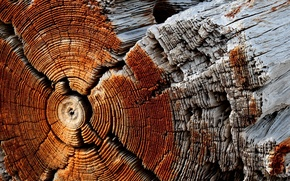 Picture background, tree, log