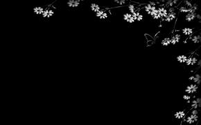 Picture flowers, butterfly, black background