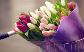 Picture drops, flowers, bike, bouquet, tulips, bike, flowers, tulips, drops, bouquet
