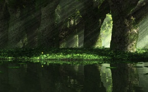 Picture grass, rays, light, trees, nature, narcissus mirror