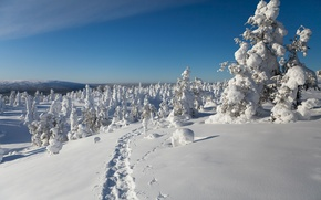 Picture winter, snow, trees, traces, Finland, Finland, Lapland, Lapland
