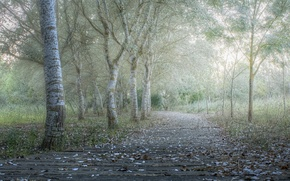 Picture road, autumn, trees, fog, Park, morning