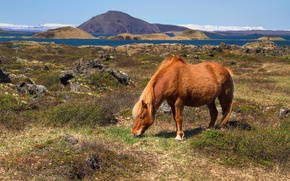 Picture mountains, hills, horse, pasture, Bay, Iceland