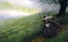 Picture field, rain, Gandalf