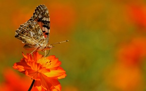 Wallpaper wings, moth, plant, butterfly, insect, flower