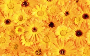 Wallpaper Yellow, Bouquet, Petals