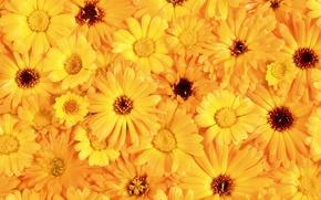 Wallpaper Bouquet, Yellow, Petals