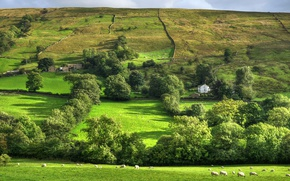 Picture greens, summer, trees, field, sheep, pasture, UK, houses, Yorkshire, Dentdale