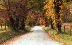 Picture road, trees, autumn, leaves, shadows, countryside, farm, fall
