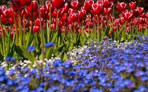Picture Green, Flowers, Park, Spring, Sunshine, Tulips, Bright, Blossom