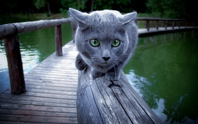 Picture cat, background, railings