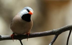 Picture nature, bird, Wallpaper, branch, beak